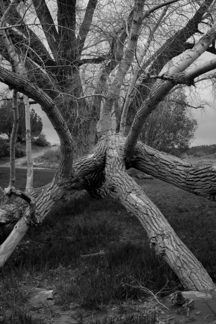 Cottonwood, Cortez, CO (Photo: Jason M. Vaughn, All images copyright © 2018 by Jason M. Vaughn Photography. All rights reserved.)