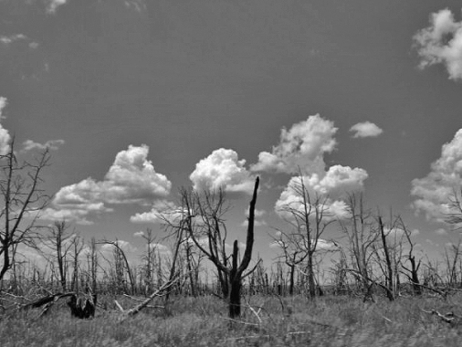 Burned trees, Mesa Verde National Park, CO (Photo: Jason M. Vaughn, All images copyright © 2018 by Jason M. Vaughn Photography. All rights reserved.)