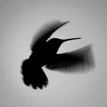 Hummingbird, near Villanueva, New Mexico, 2013 (Photo: Jason M. Vaughn, All images copyright © 2018 by Jason M. Vaughn Photography. All rights reserved.)